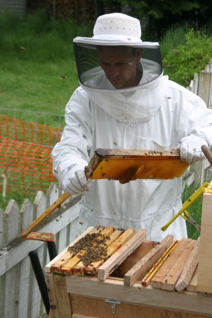 Shifting my Beehive from Langstroth Frames to Top Bar Hive ...