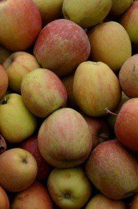 Tree-picked, organic apples were gleaned fresh from the orchard